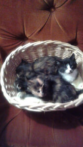 Kittens will be ready for new homes early May