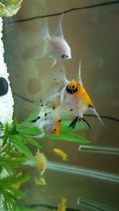 45 gallon freshwater aquarium