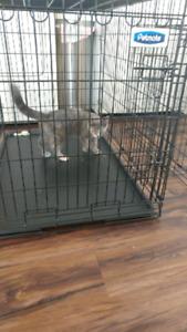 2 cage a chien