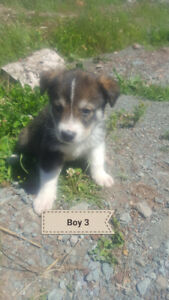 Puppies looking for forever homes NBSPCA #295