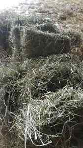 Small square bales for sale
