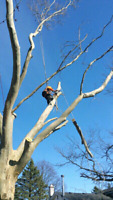 Best Deal Tree Removal, Trimming & Pruning Service