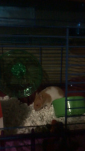 Hamster, cage and exercise ball