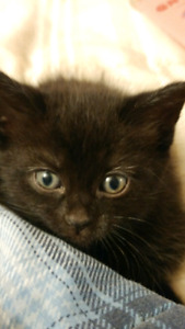 *****Kittens ready for new homes!!****