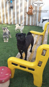 CAGELESS SMALL DOG SITTING HOME OF K9 CPR CERTIFIED DOG TRAINER