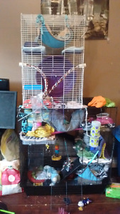 ($$ can be negotiated) 4 female rats for sale!!❤ URGENT