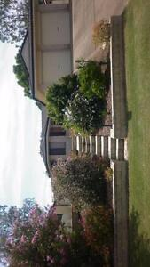 Share house,  2 rooms to rent in Churchill,  Ipswich  QLD 4305. Churchill Ipswich City Preview