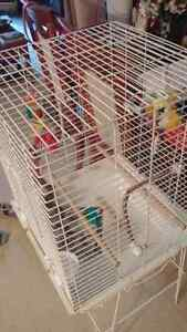 Bird Cage for Sale 40 Dollars OBO