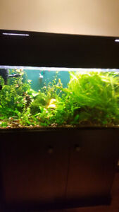 40 gallons
