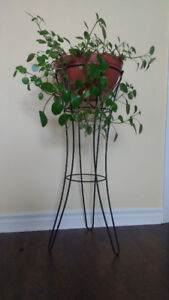 Lovely plant with stand