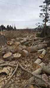 Black Out Tree Removal Edmonton Edmonton Area image 9