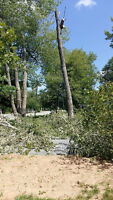 Tree Removal and Tree Pruning
