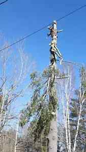 Fully Insured Tree Removal Kingston Kingston Area image 9