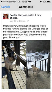 Lost dog in Limoges near Calypso