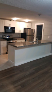 Newly renovated legal basement suit for RENT St. Albert