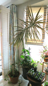 Indoor Tree and Plant