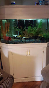 Aquarium and Fish for Sale Windsor Region Ontario image 1