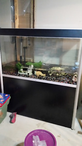 Fluval Profile 1200 (85gal) comes with stand/filter and decor