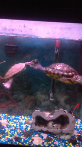 Turtles & Tank,  $$ or trade.