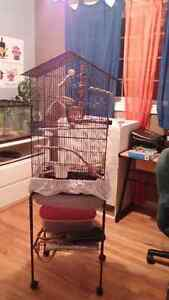 Pair of zebra finch with cage for sale Gatineau Ottawa / Gatineau Area image 1