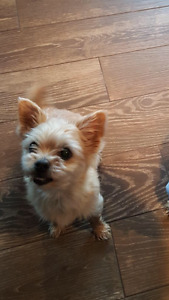Desperately looking for our family dog