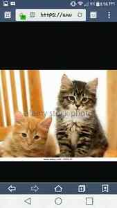 Two male kittens wanted!