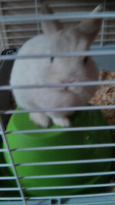 BEAUTIFUL bunny for sale