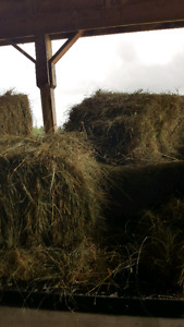 Grass hay 3$ good for goats n cows