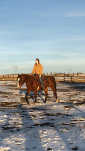 Well Broke All Around Western Mare Fancy Trail Horse