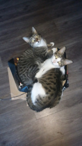 2 adult female cats to a good home
