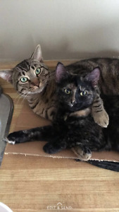 2 cats in desperate need of a home !