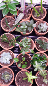 Succulent, cactus and houseplant collection for sale!