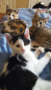 adorable rescued kittens need quality homes