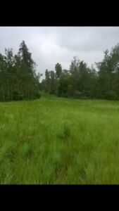 Land Close to Turtle Lake, Easy Access & Lots of Privacy!