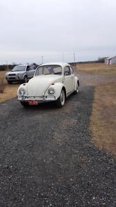 Beetle 1966
