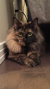 Beautiful Cat needs new home.