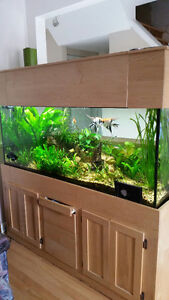 120 gal aquarium and solid maple stand as well as all accessorie