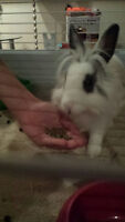 *BUNNY BOARDING* PLAYPEN SIZE CAGE AREA