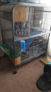 Chinchilla with large cage and supplies