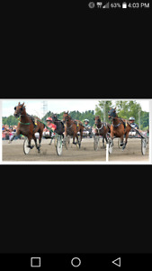 Kemps Harness horse & racing equipment