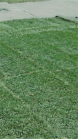 Sod Installation – Great Prices