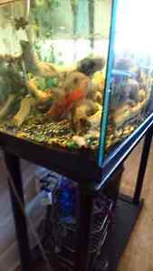 Need to rehome our Oscar and pleco. Comes with tank, stand and f