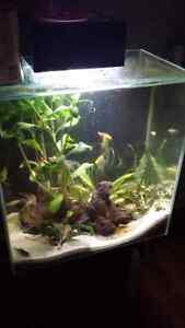 Very nice show tanks for sale with stands.