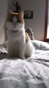 Lovely Quiet Female Cat Available for Loving Owner