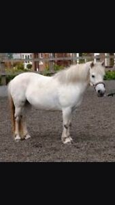 Wanted -small pony