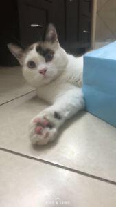 MISSING: Cat