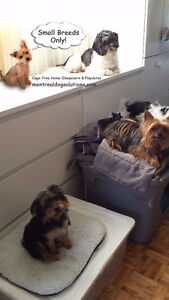Home daycare/hotel for small dogs since 2010 West Island Greater Montréal image 10