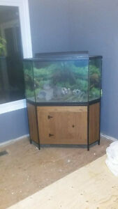 70 gallon corner fish tank complete