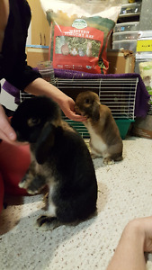 Two Female Rabbits to a good home