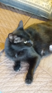 Beautiful 1 Year Old Female Black Cat Free to a Good Home